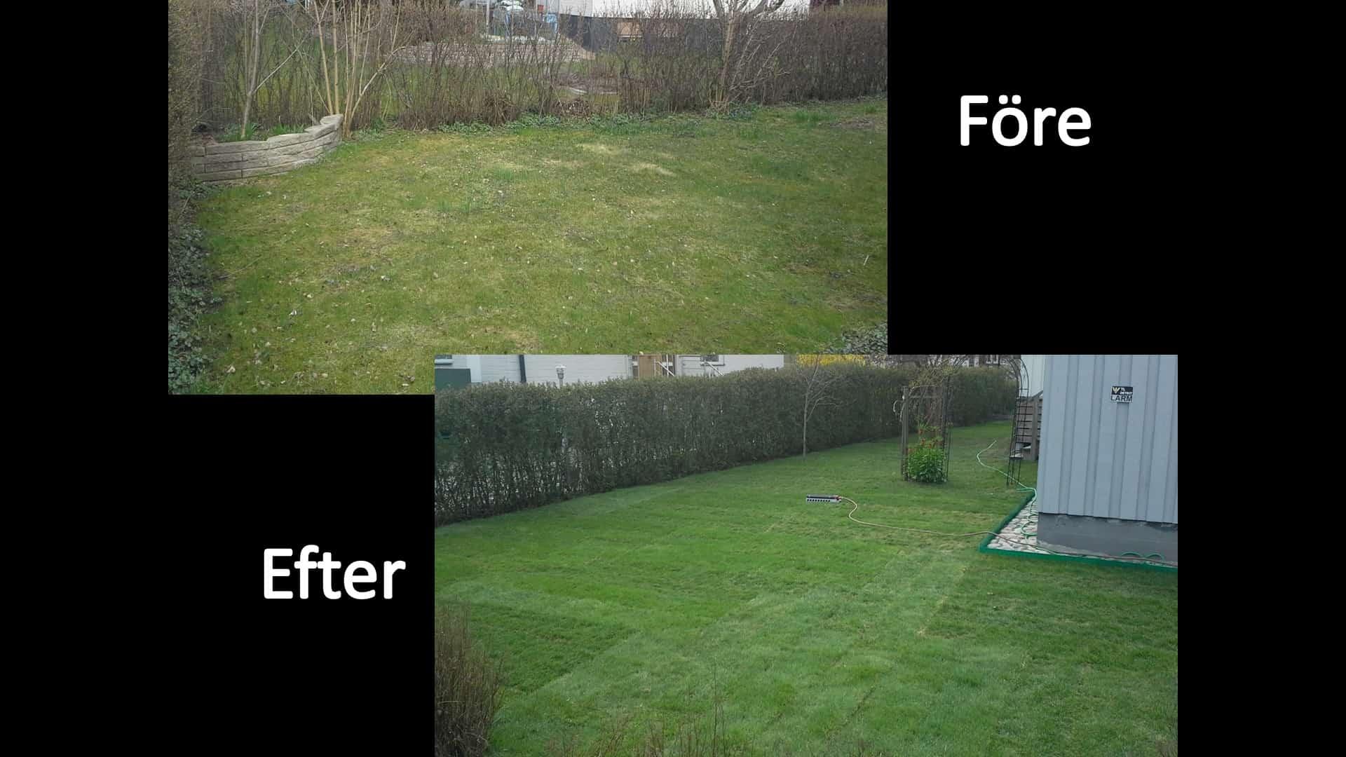 """Referensjobb """"Anlägga gräsmatta"""" utfört av Gröna Bussen AB"""